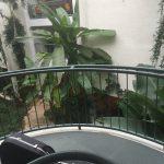 Konzert im Palmengarten